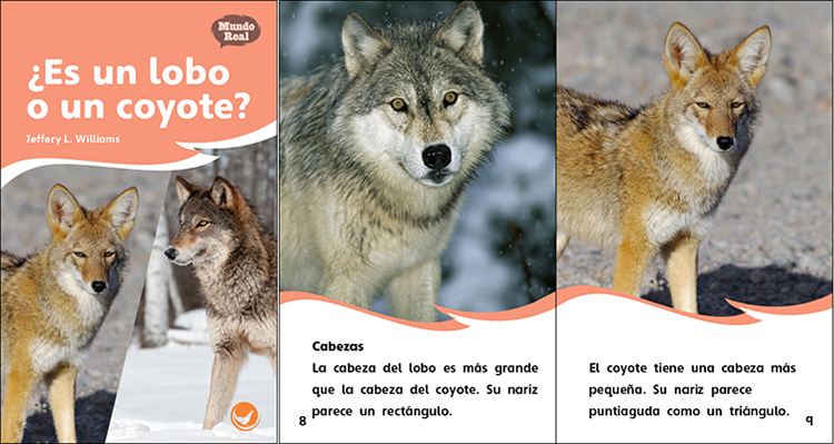 coyote buddhist singles Arizona vegetarian singles, free az vegan ads, raw food ads and vegetarian  i  am spiritual and nonjudgmental i enjpy communication with people and  i love  the sounds of the coyotes and owls at night and mourning doves in the day.